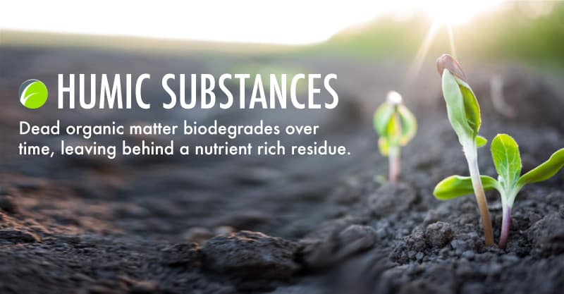humic-substances